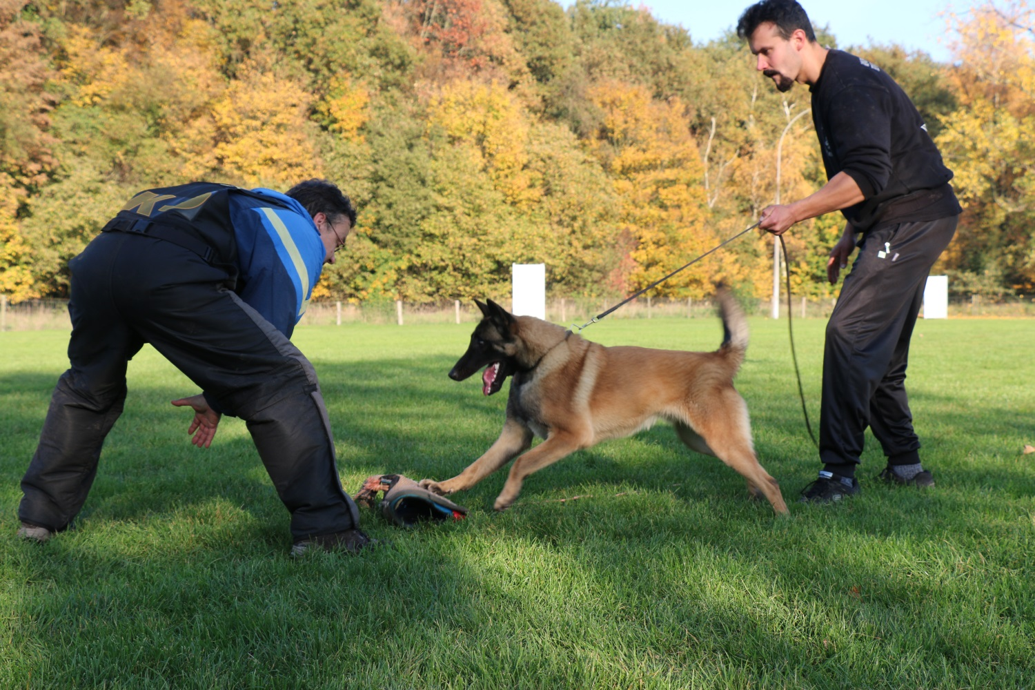 Kennel Malinois Shepherd & Tervueren Shepherd